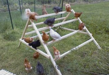 posadera de aves