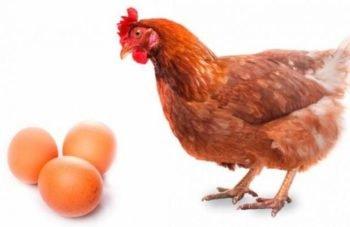 aves de huevo y carne
