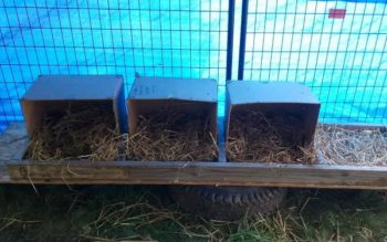 nidos con cajas