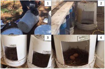 modelos de nidos para aves