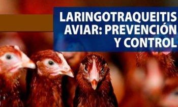 Herpesvirus 1 aviar