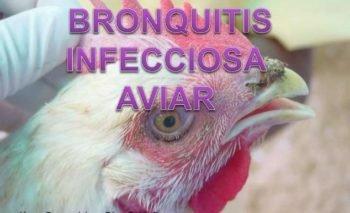 bronquitis aviar