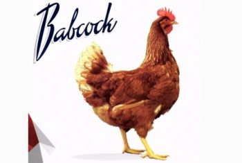 gallina babcock brown