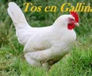 7 Remedios caseros para la tos en gallinas