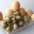 Huevo de Codorniz vs Huevo de Gallina