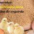 Alimentos comerciales para pollos de engorde