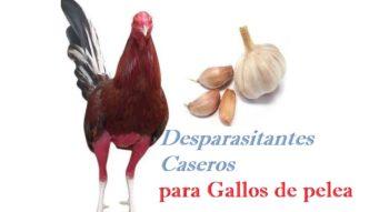 purgante para gallos
