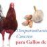 Purgantes Naturales para Gallos de Pelea