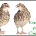Vacunas para Codorniz