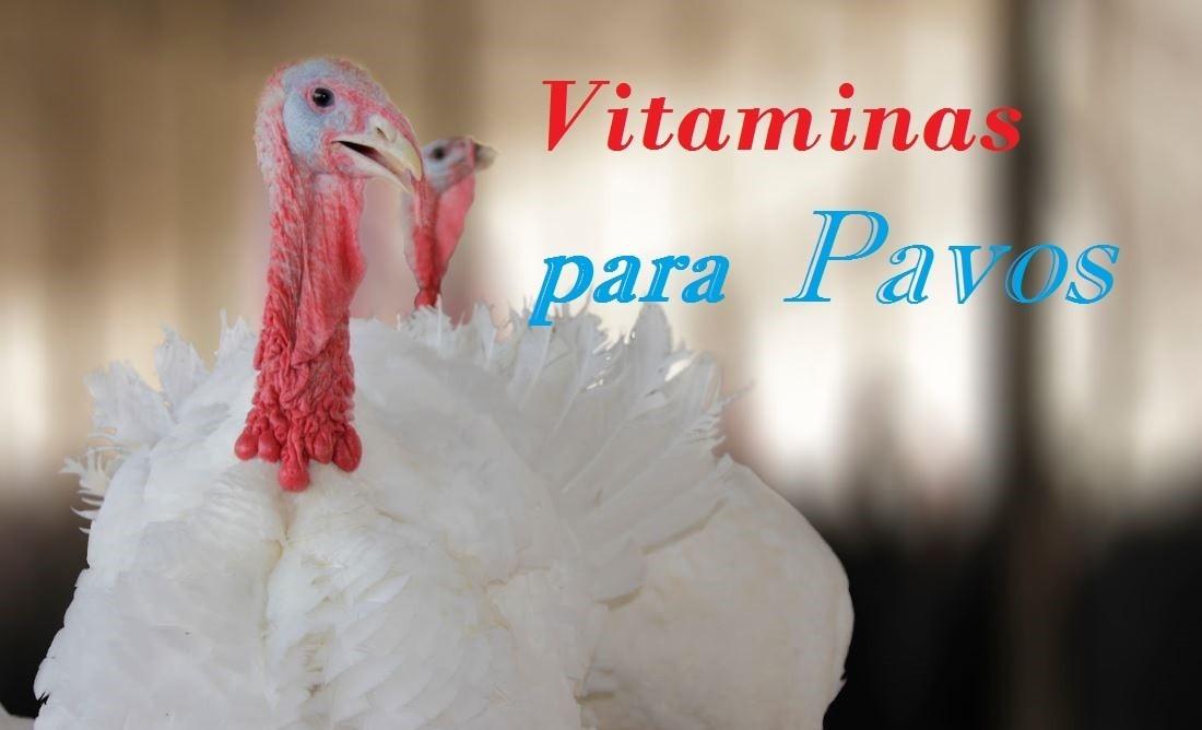 vitaminas para pavos