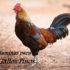 10 Mejores vitaminas para gallos de pelea