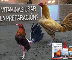 Vitaminas para Gallos de Pelea