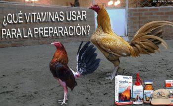 productos vitaminicos para aves de combate