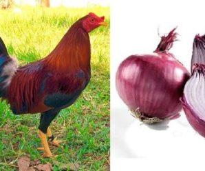 Ajo y cebolla para pollos ventajas y preparación