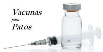 programa de vacunas en aves