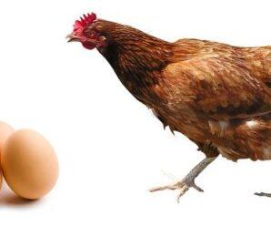 Baja Producción de Huevos
