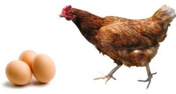 baja producción de huevo
