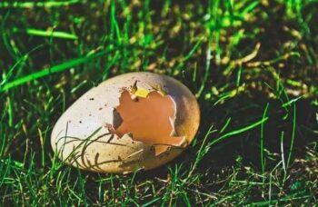 huevos fuera del nido