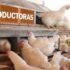 Alimentación de gallinas reproductoras