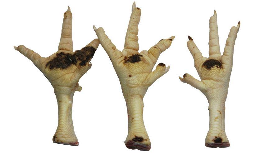 enfermedad en patas de aves