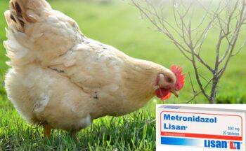 Metronidazol para pollos