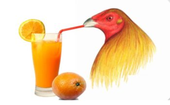 cítricos para aves