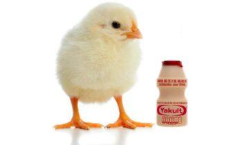 Chế phẩm sinh học cho gà