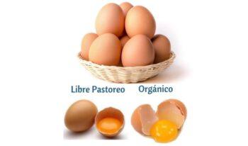 Beneficios de huevo orgánico y libre pastoreo