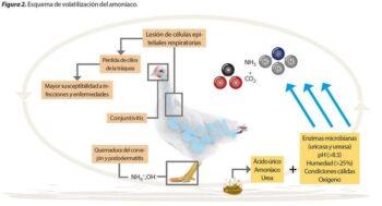 origen de amoniaco en aves