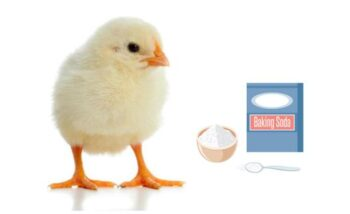Carbonato en gallinas