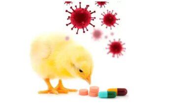 Antibiótico para problemas respiratorios en aves