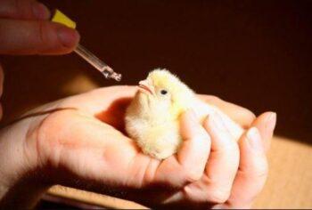 fármacos para gripe en aves