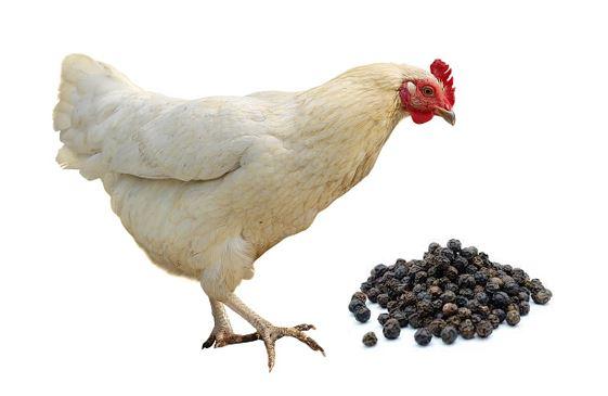 Beneficios de la pimienta negra en pollos