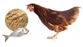 Para que sirve la harina de pescado