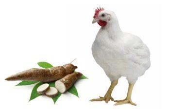 Harina de yuca para animales