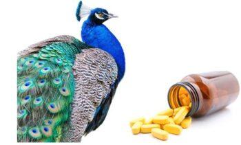 Desparasitante para aves